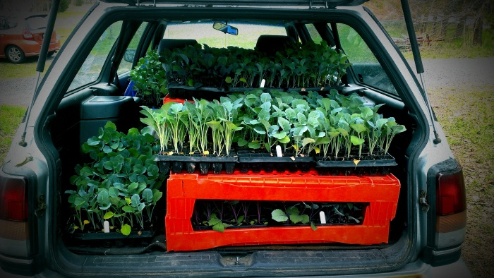 plants in car